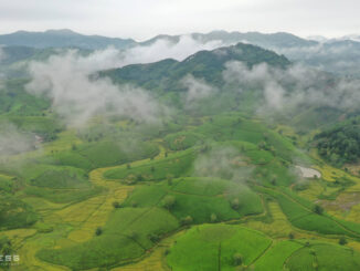 The most beautiful tea hill valley in Vietnam