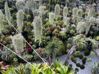 Khu vườn Nam Mỹ giữa lòng thành phố