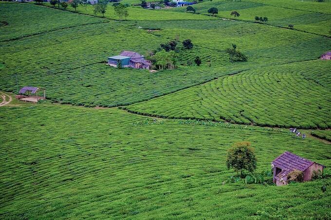 Moc Chau tourism, tourists, Moc Chau tea hill, Kia Cave - Pa Co, cloud hunting, homestay, Destination,