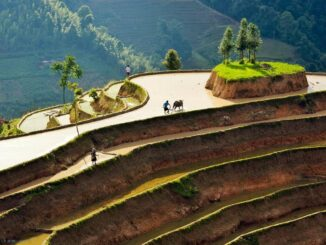 The masterpiece of Hoang Su Phi terraced fields in the pouring season